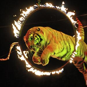 Цирки Уфы