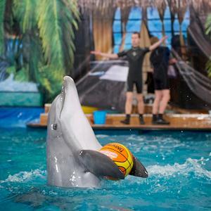 Дельфинарии, океанариумы Уфы