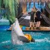 Дельфинарии, океанариумы в Уфе