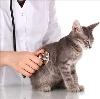 Ветеринарные клиники в Уфе